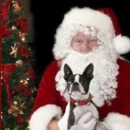 Holidays From Our Pets' Perspective:  Insights For Keeping This Time Enjoyable For Everyone