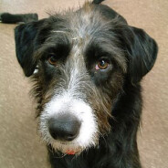 Natural Pet Care – Holistic Treatments For Your Pet