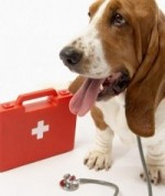 hound with first aid kit
